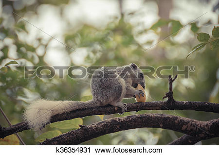 Stock Photography of Squirrel holding onto a tree branch k36354931.