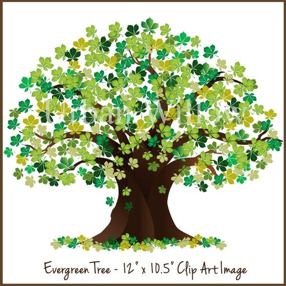 Evergreen Clipart Tree, Tree Graphic, Green Tree, Oak Tree Graphic.