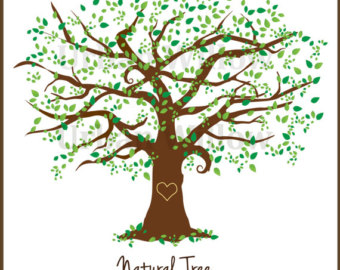 Family Tree, 12 Inch Natural Tree Clip Art, Large Leafy Tree, Elm.