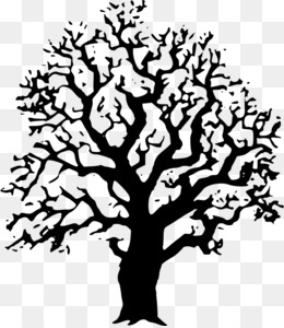 Family Tree Vector PNG and Family Tree Vector Transparent.