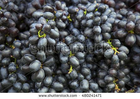 Family vitaceae clipart #15