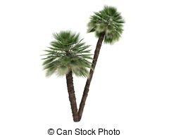 Palm fan clipart #15