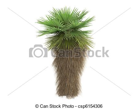 Palm fan clipart #16