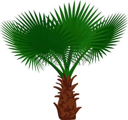 242 Fan Palm Tree Stock Illustrations, Cliparts And Royalty Free.
