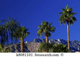 Fan palm tree Clipart and Stock Illustrations. 235 fan palm tree.