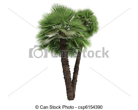 Palm fan clipart #6