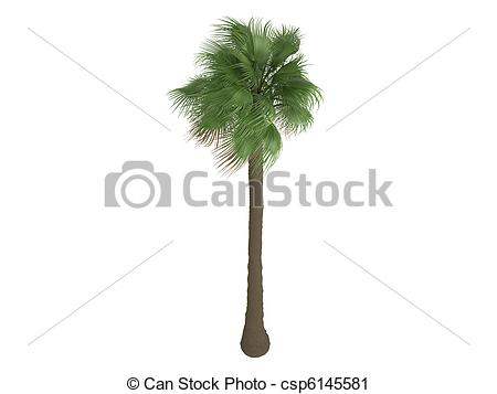 Palm fan clipart #10