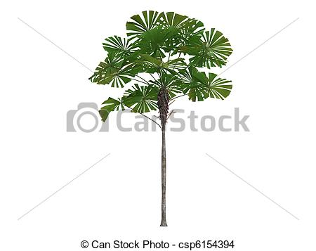 Fan palm Illustrations and Clip Art. 450 Fan palm royalty free.