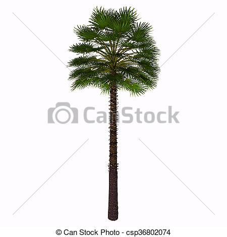 Palm fan clipart #12