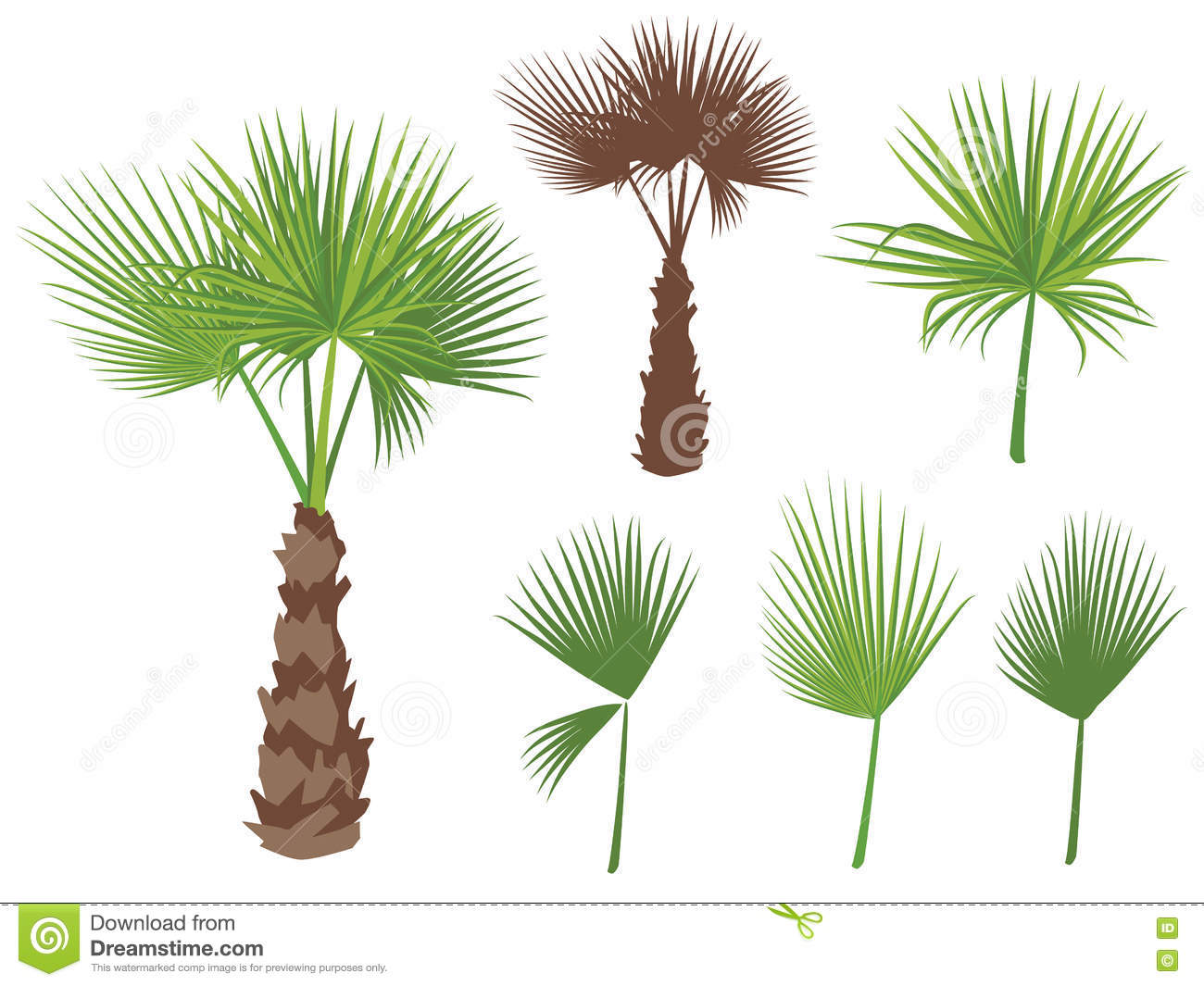 Set Fan Palm Round Leaves Fan Palm Tree Stock Illustrations.