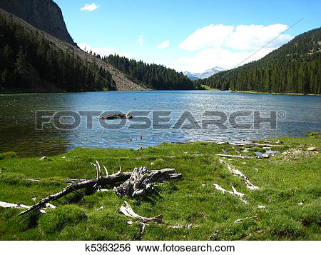Stock Images of White branches and grass close to a mountain pond.