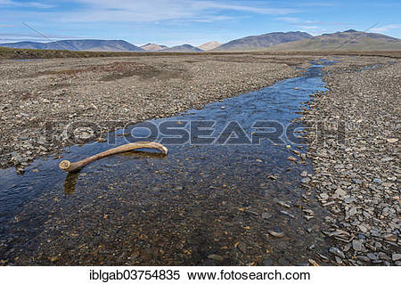 "Stock Image of ""Mammoth tusk in a riverbed, Doubtful River, near."