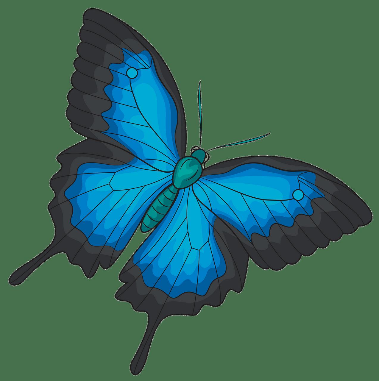 Farfalla Ulisse immagine clipart. Scarica Gratis..
