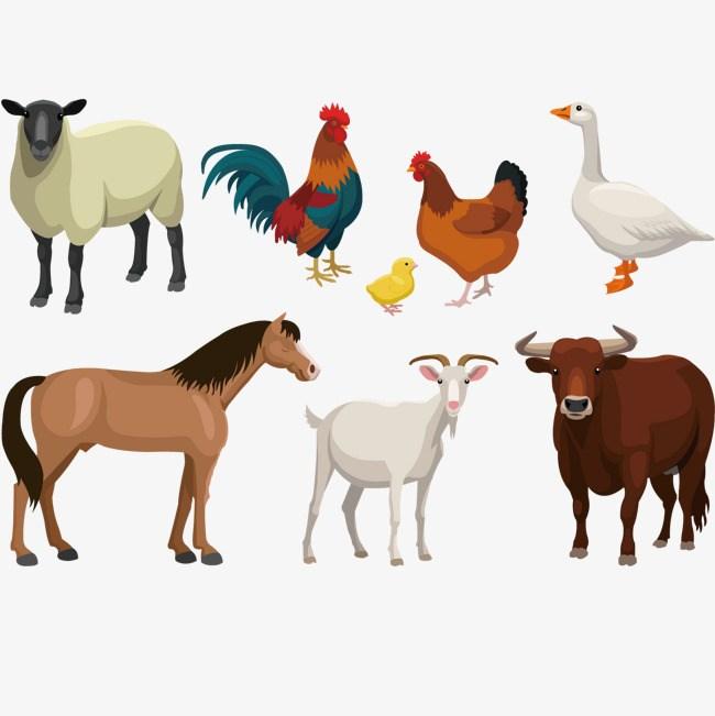 Farm animals clipart png 7 » Clipart Portal.