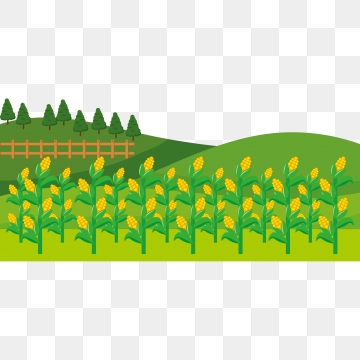 Farm Field Png, Vector, PSD, and Clipart With Transparent Background.