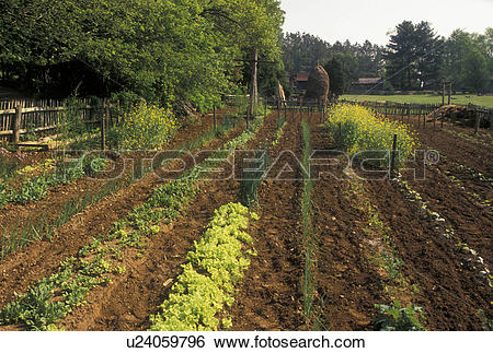 Stock Images of garden, farming, Norris, TN, Tennessee, Vegetable.