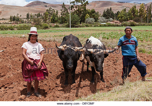 Farmers Ploughing With Oxen Stock Photos & Farmers Ploughing With.