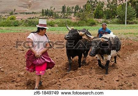 Stock Photograph of Farming images of couple wotking with oxen on.