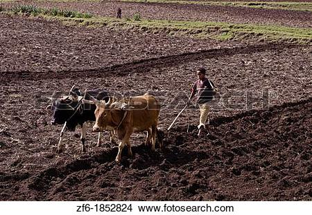 Stock Photo of Rift Valley Langano Ethiopia Africa farming with.