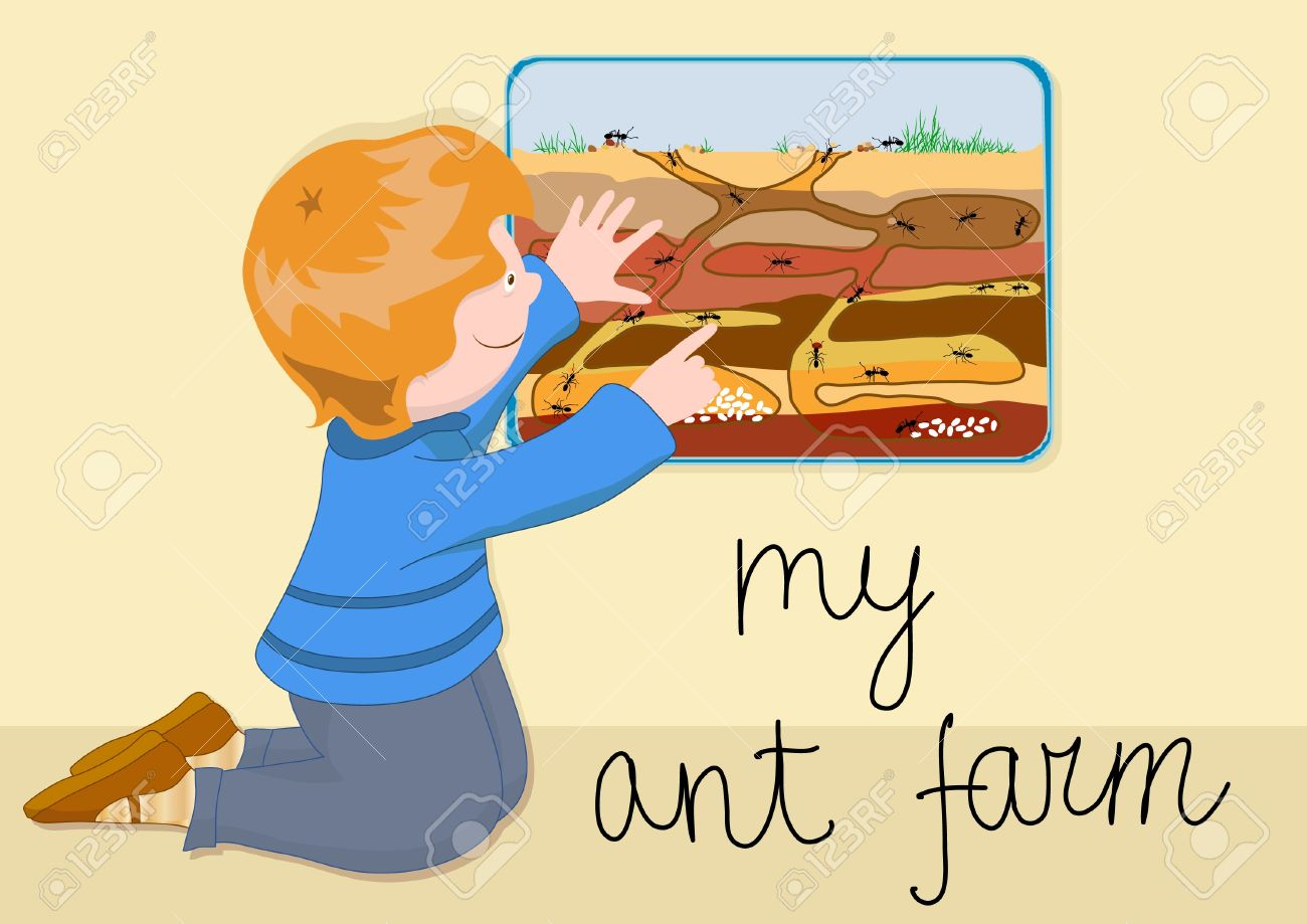 The Child With Interest Watching The Ants In A Transparent Ant.