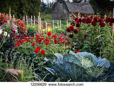 Stock Photograph of One Love organic farm; Abbotsford, British.