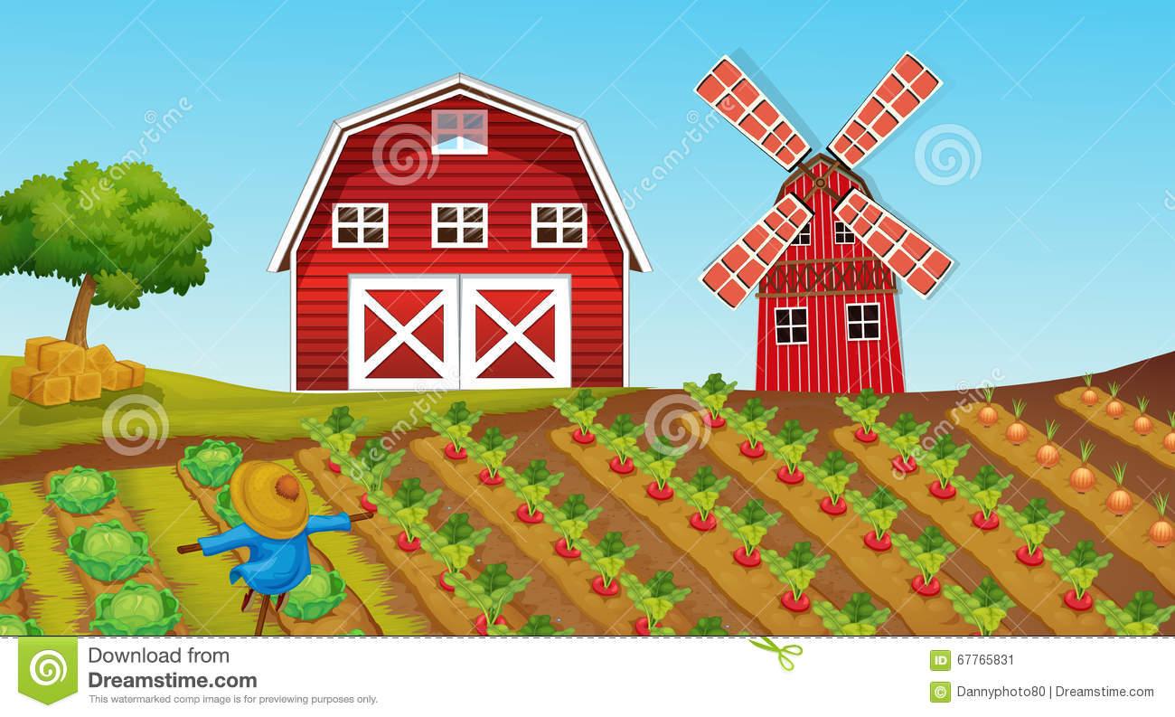 Farmland With Crops On The Farm Stock Vector.