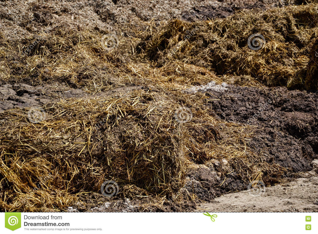 Pile Of Manure In The Countryside. Heap Of Dung On The Farm Yard.