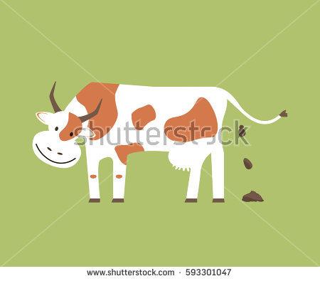 Cow Poop Stock Photos, Royalty.