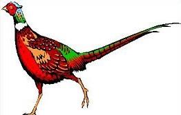 Free Pheasant Clipart.