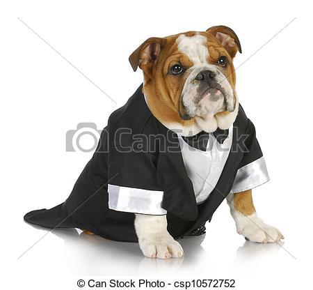 Stock Images of fancy dog.