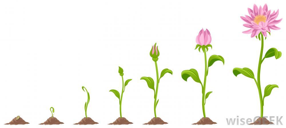 Grow Clipart.