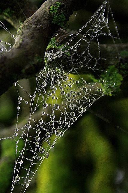 1000+ images about Spider Webs on Pinterest.