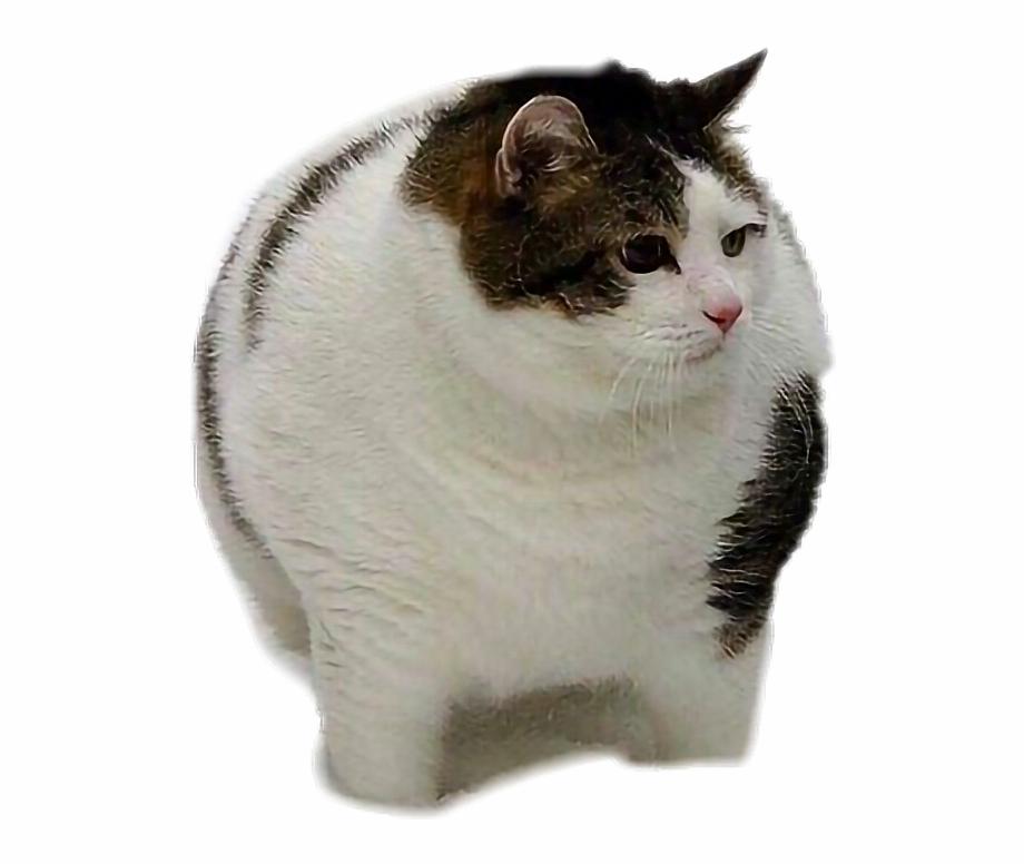 fat #cat #fatcat.