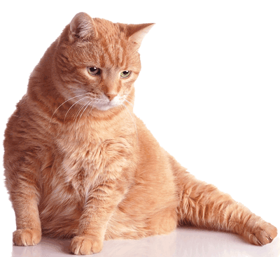 Fat Cat Png (109+ images in Collection) Page 2.