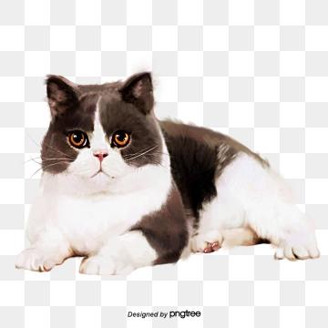 Fat Cat PNG Images.