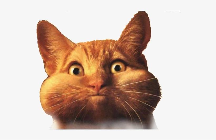 Fat Cat Png Transparent.