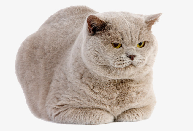 Fat Cat Png (99+ Images In Collection) P #561683.
