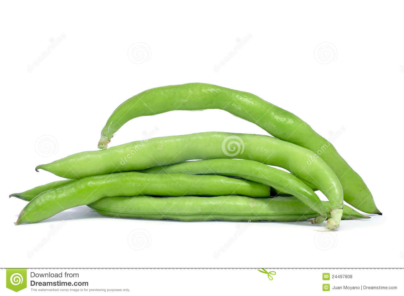 Fava Beans Broad Beans Stock Photos, Images, & Pictures.