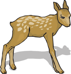 Fawn clipart #13