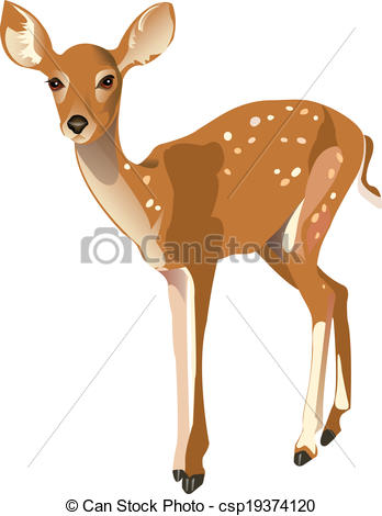 Fawn Illustrations and Clipart. 921 Fawn royalty free.