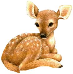 Clipart fawn.