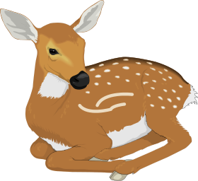 Fawn Clip Art Download.