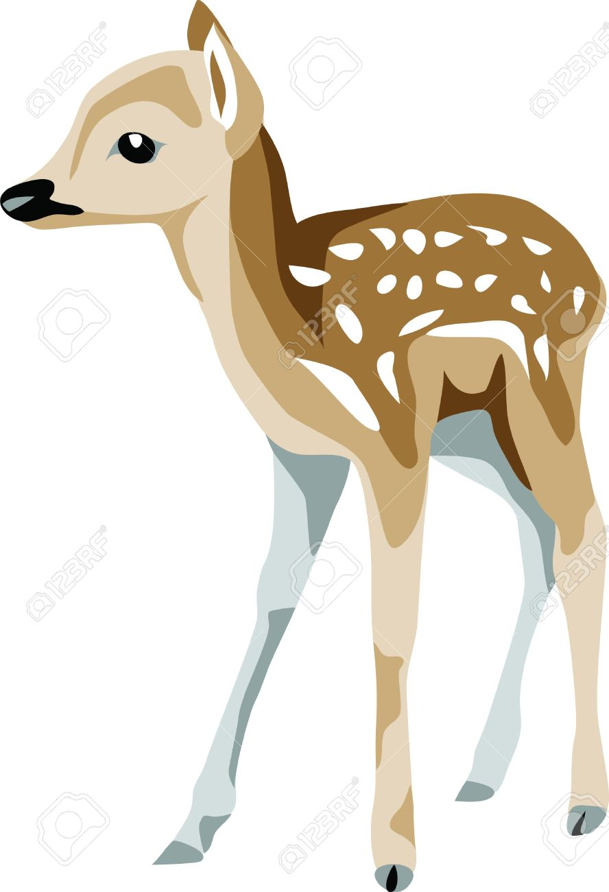 Fawns Stock Illustrations, Cliparts And Royalty Free Fawns Vectors.