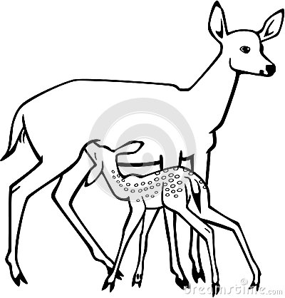 Doe And Nursing Fawn Stock Vector.