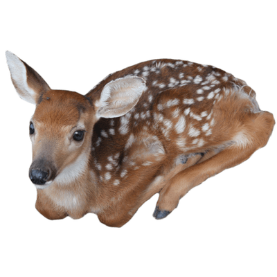 Baby Deer transparent PNG.