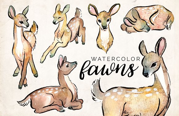 Watercolor Fawns Clipart Set ~ Illustrations on Creative Market.