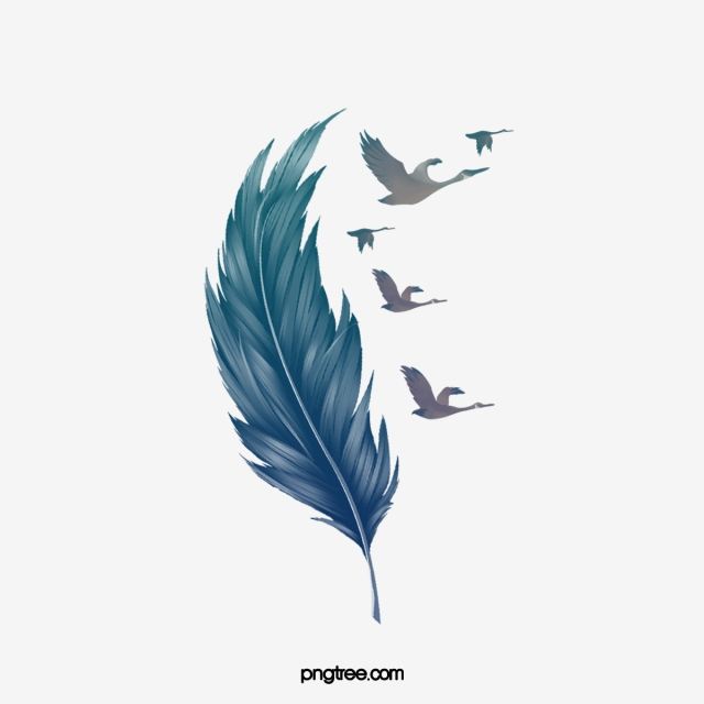 Feather Png, Vector, PSD, and Clipart With Transparent Background.