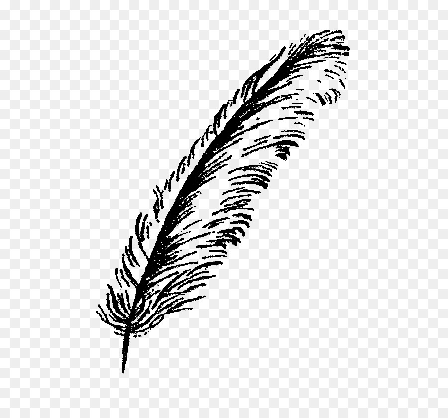 Feather clipart png » Clipart Station.