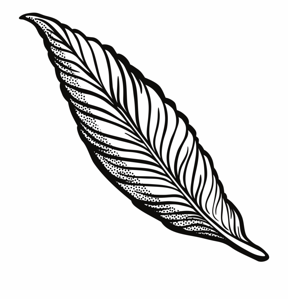 Feather Clipart Png.