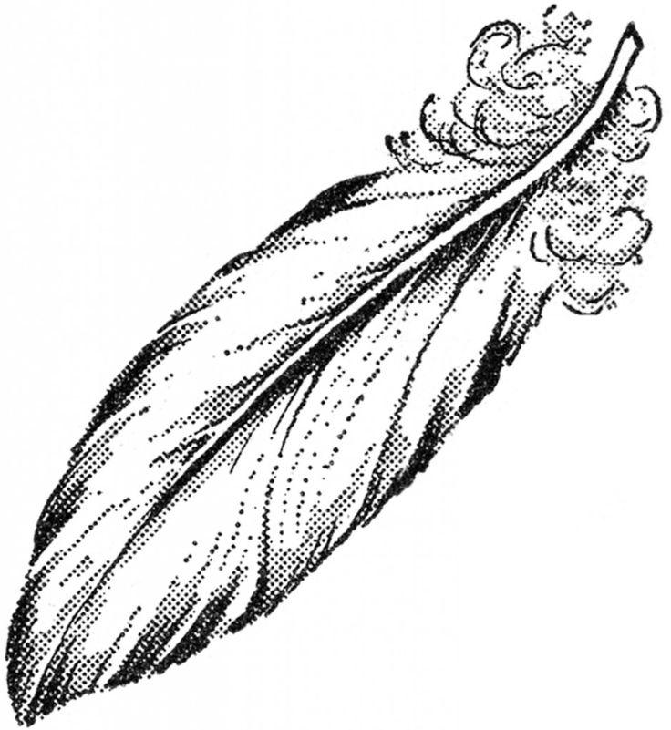 1000+ ideas about Feather Illustration on Pinterest.